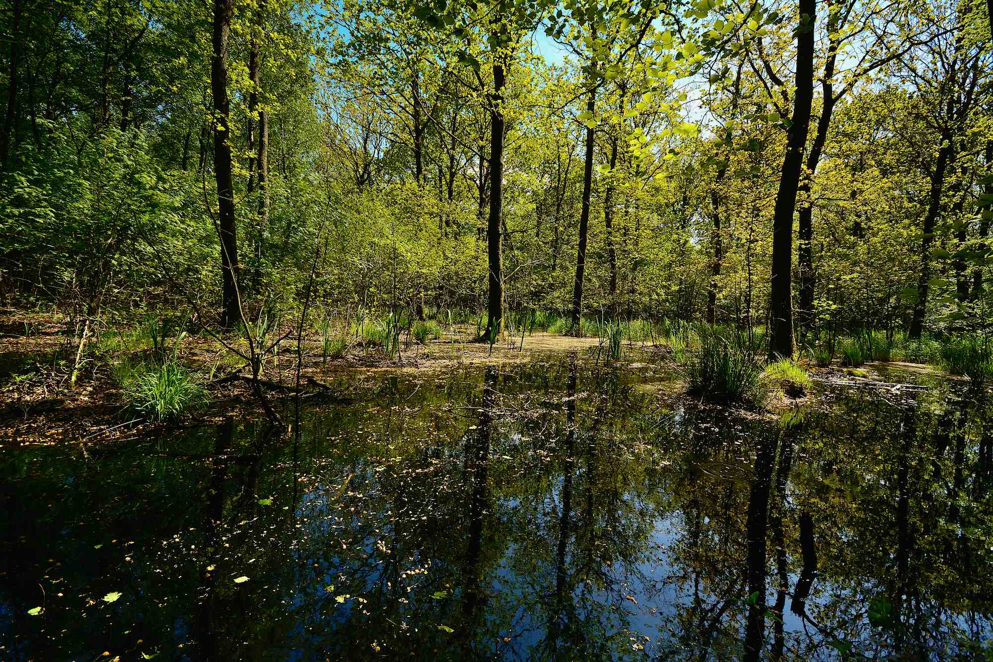 Draved Skov – Danmarks største vildskov