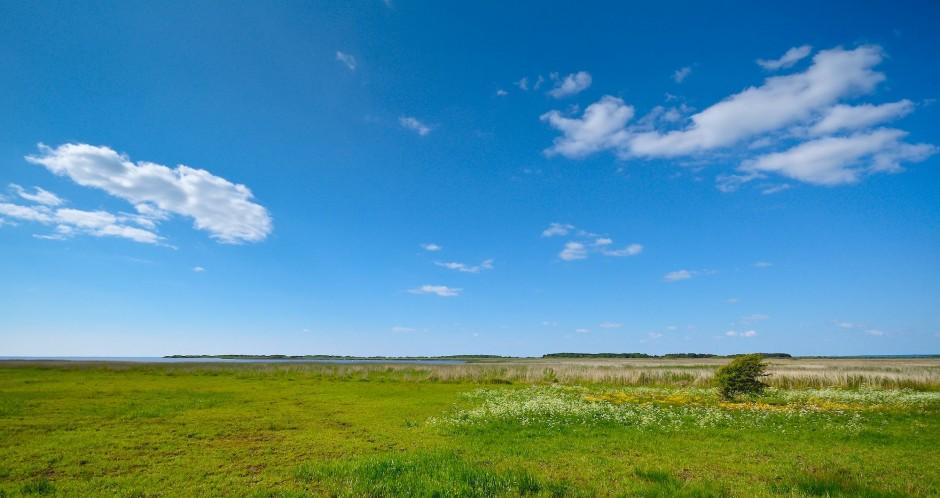 Et hjørne af det 2.500 hektar store floddelta ved Skjern (foto © Rune Engelbreth Larsen)
