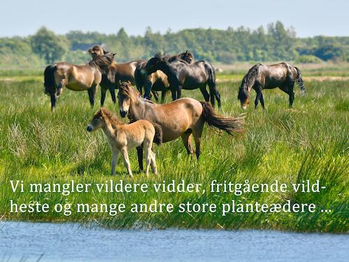Vildere viddere i dansk natur
